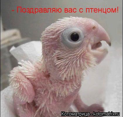 Котоматрица: - Поздравляю вас с птенцом!