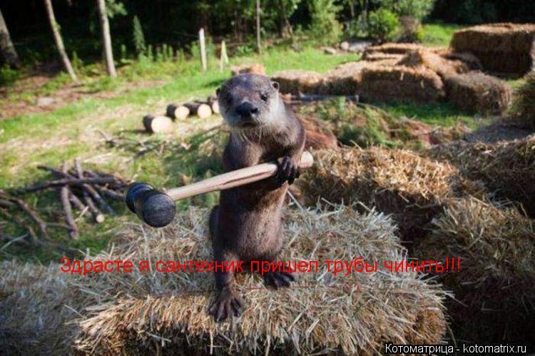 Котоматрица: Здрасте я сантехник пришел трубы чинить!!!