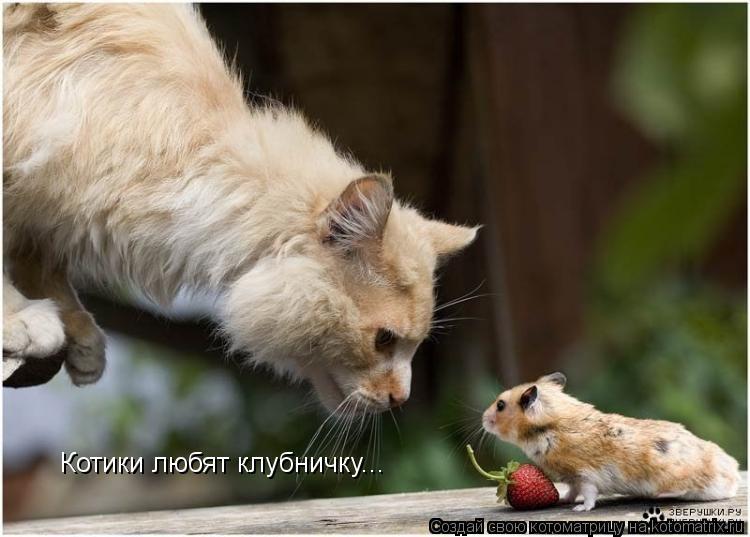 Котоматрица: Котики любят клубничку...