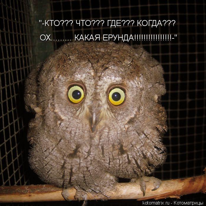 """Котоматрица: """"-КТО??? ЧТО??? ГДЕ??? КОГДА??? ОХ......... КАКАЯ ЕРУНДА!!!!!!!!!!!!!!!!-"""""""