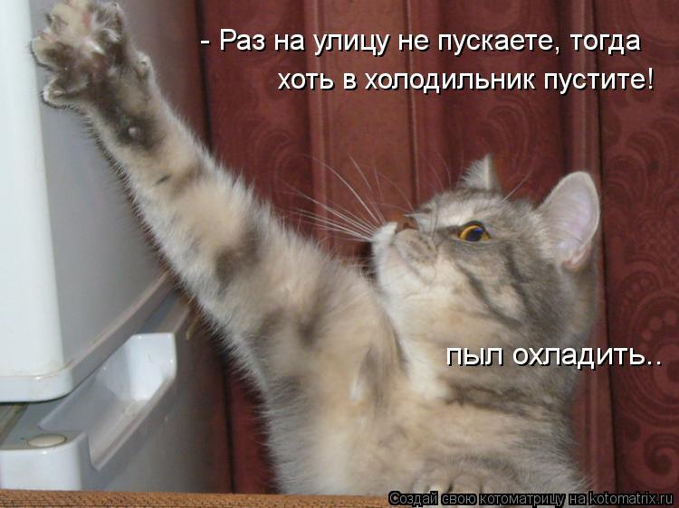 Котоматрица: - Раз на улицу не пускаете, тогда хоть в холодильник пустите! пыл охладить..