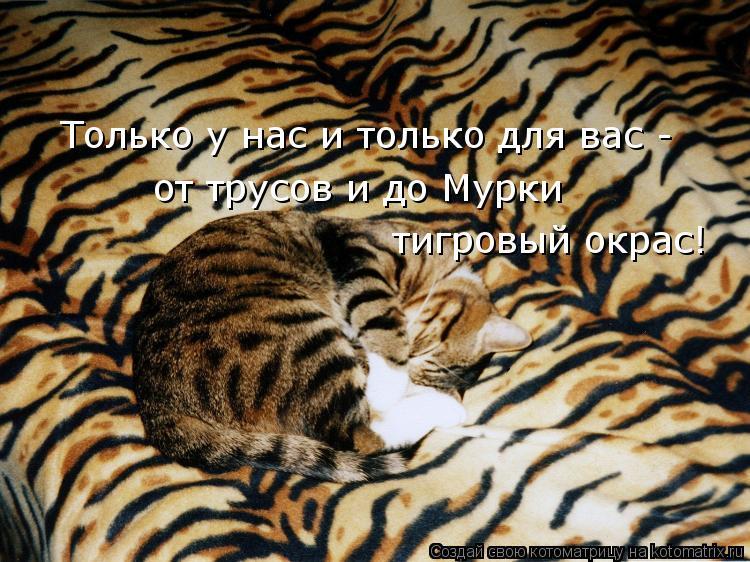 Котоматрица: Только у нас и только для вас - от трусов и до Мурки тигровый окрас!