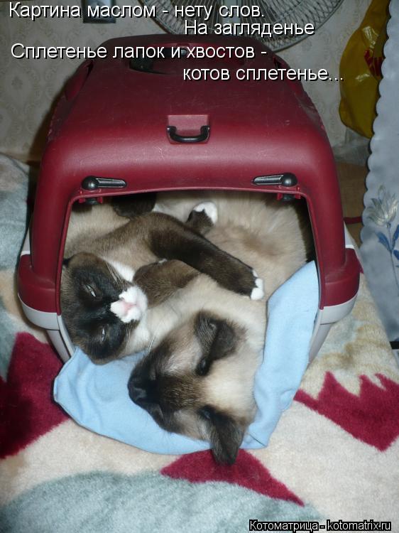 Котоматрица: Картина маслом - нету слов.  На загляденье Сплетенье лапок и хвостов - котов сплетенье...