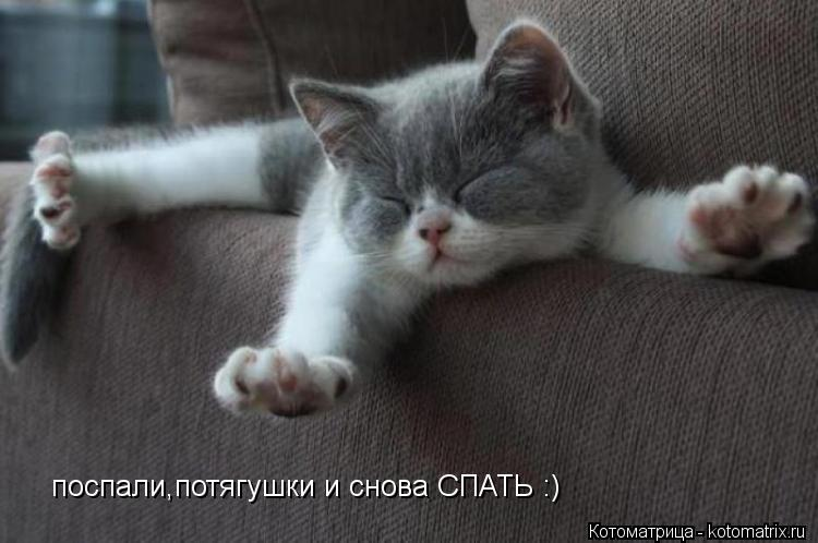 Котоматрица: поспали,потягушки и снова СПАТЬ :)