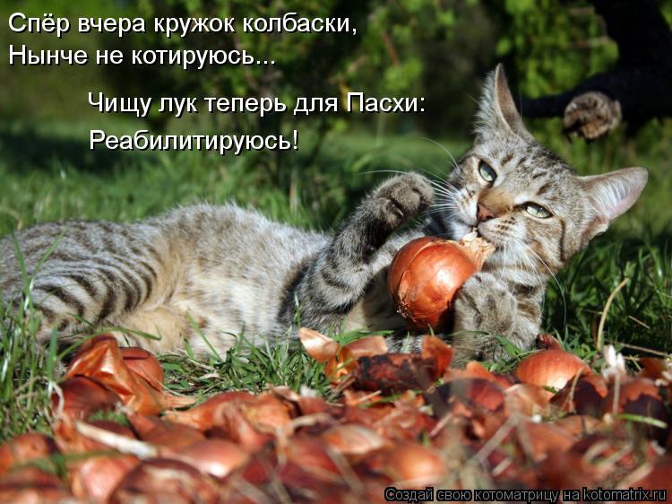 Котоматрица: Спёр вчера кружок колбаски, Нынче не котируюсь... Чищу лук теперь для Пасхи: Реабилитируюсь!