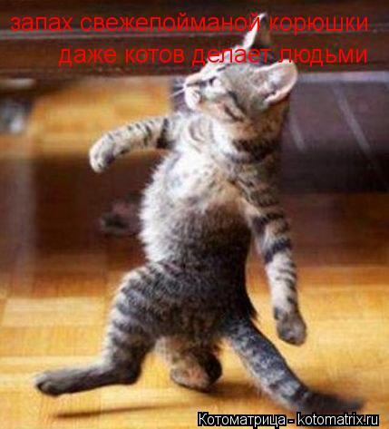 Котоматрица: запах свежепойманой корюшки даже котов делает людьми