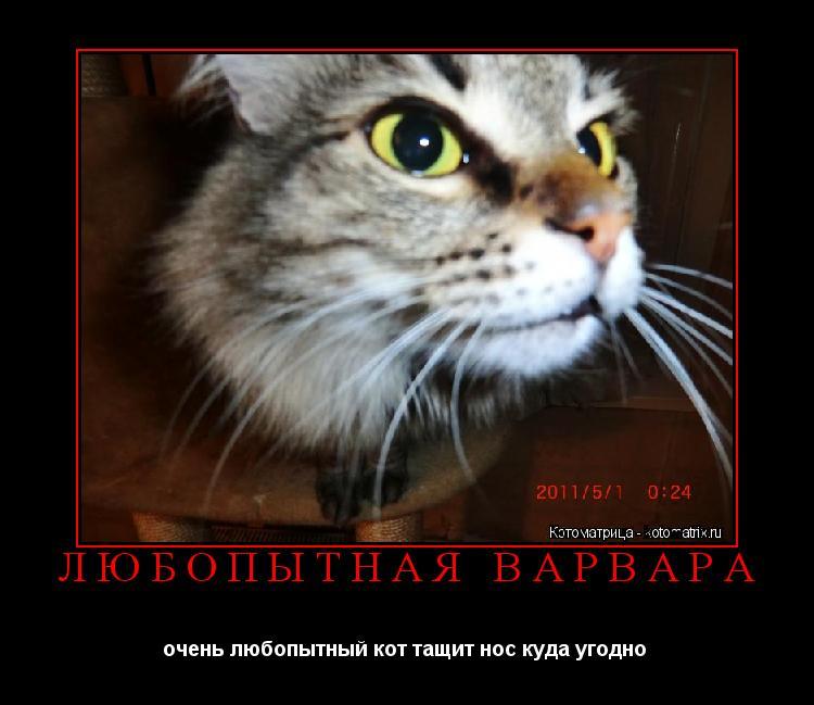 Котоматрица: ЛЮБОПЫТНАЯ ВАРВАРА очень любопытный кот тащит нос куда угодно