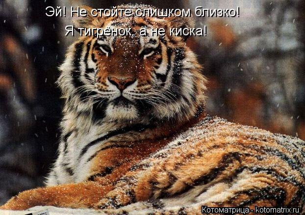 Котоматрица: Эй! Не стойте слишком близко! Я тигрёнок, а не киска!