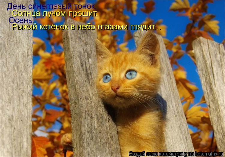 Котоматрица: День синеглазый тонок, Солнца лучом прошит. Осень. Рыжий котёнок в небо глазами глядит...