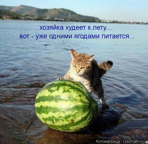 Котоматрица: хозяйка худеет к лету... вот - уже одними ягодами питается...