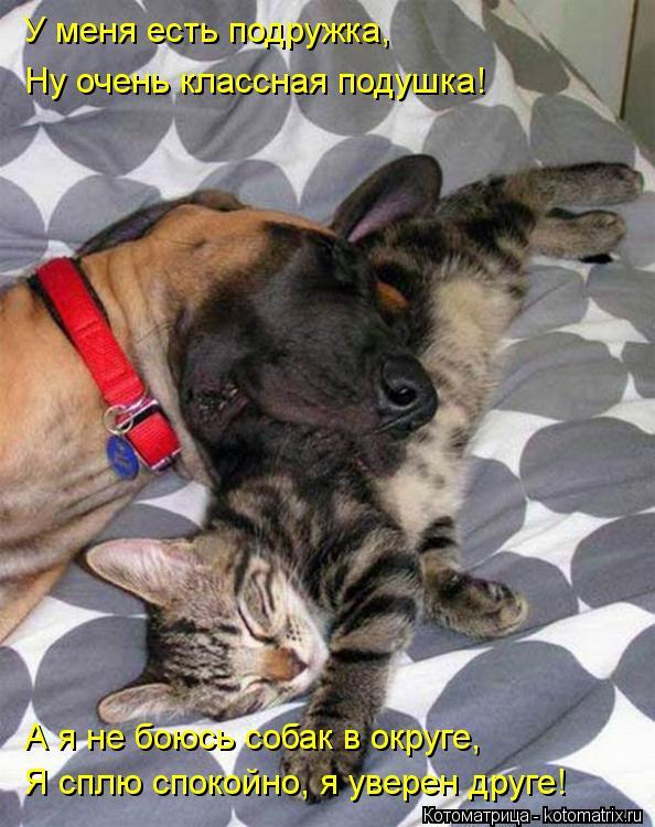 Котоматрица: У меня есть подружка, Ну очень классная подушка! А я не боюсь собак в округе, Я сплю спокойно, я уверен друге!