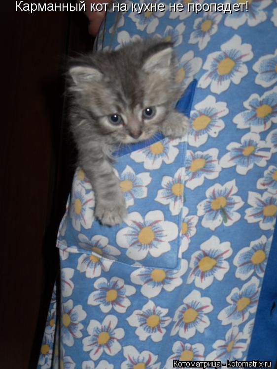 Котоматрица: Карманный кот на кухне не пропадет!