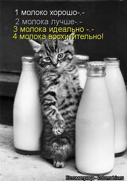 Котоматрица: 1 молоко хорошо-.- 2 молока лучше-.- 3 молока идеально -.- 4 молока восхитительно!