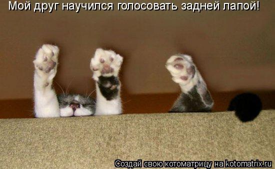 Котоматрица: Мой друг научился голосовать задней лапой!
