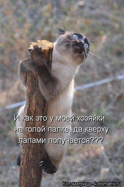 Котоматрица: И как это у моей хозяйки на голой палке, да кверху лапами получается???