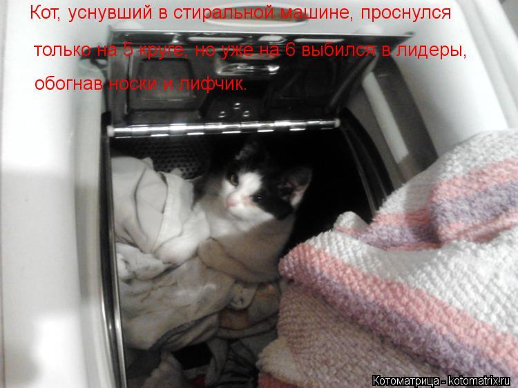 Котоматрица: Кот, уснувший в стиральной машине, проснулся  только на 5 круге, но уже на 6 выбился в лидеры,  обогнав носки и лифчик.