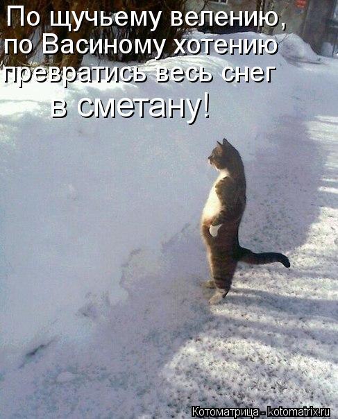 Котоматрица: По щучьему велению,  по Васиному хотению  превратись весь снег  в сметану!