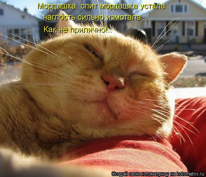 Котоматрица: Мордашка, спит мордашка устала наглость сильно измотала... Как не прилично!..