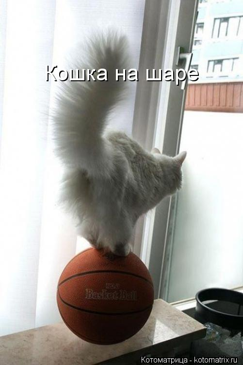 Котоматрица: Кошка на шаре