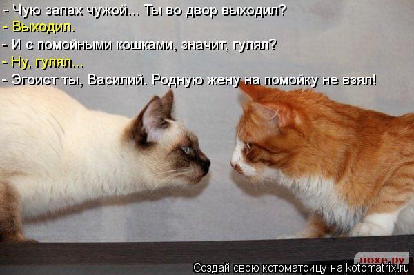 Котоматрица: - Чую запах чужой... Ты во двор выходил? - Выходил. - И с помойными кошками, значит, гулял?  - Ну, гулял... - Эгоист ты, Василий. Родную жену на помойк