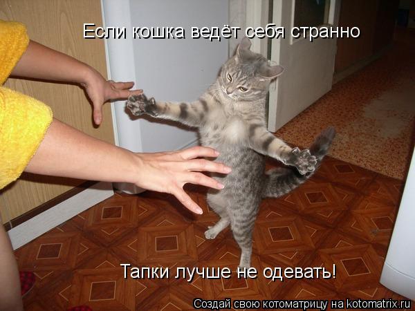 Котоматрица: Если кошка ведёт себя странно  Тапки лучше не одевать!