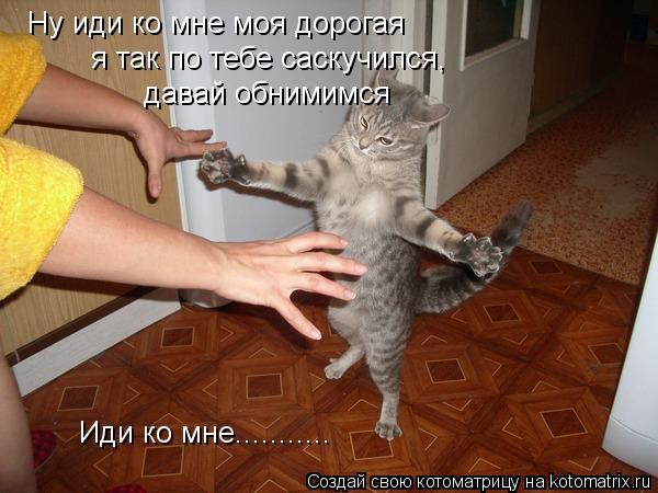 Котоматрица: Ну иди ко мне моя дорогая я так по тебе саскучился, давай обнимимся Иди ко мне...........