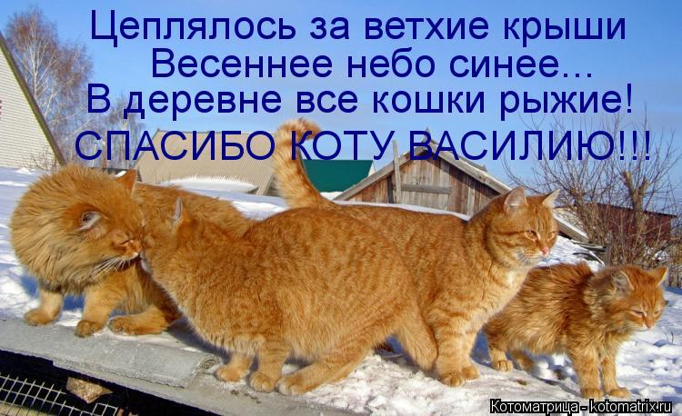 Котоматрица: Цеплялось за ветхие крыши Весеннее небо синее... В деревне все кошки рыжие! СПАСИБО КОТУ ВАСИЛИЮ!!!
