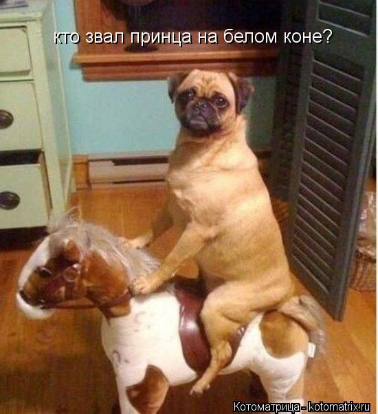 Котоматрица: кто звал принца на белом коне?