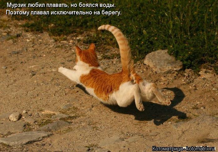 Котоматрица: Мурзик любил плавать, но боялся воды. Поэтому плавал исключительно на берегу.