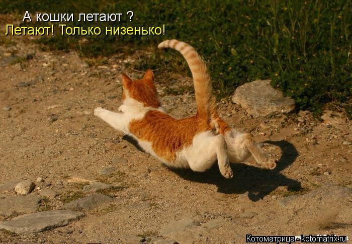Котоматрица: А кошки летают ?  Летают! Только низенько!