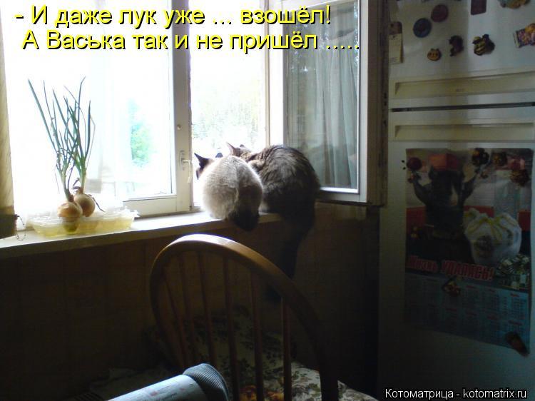 Котоматрица: - И даже лук уже ... взошёл! А Васька так и не пришёл .....