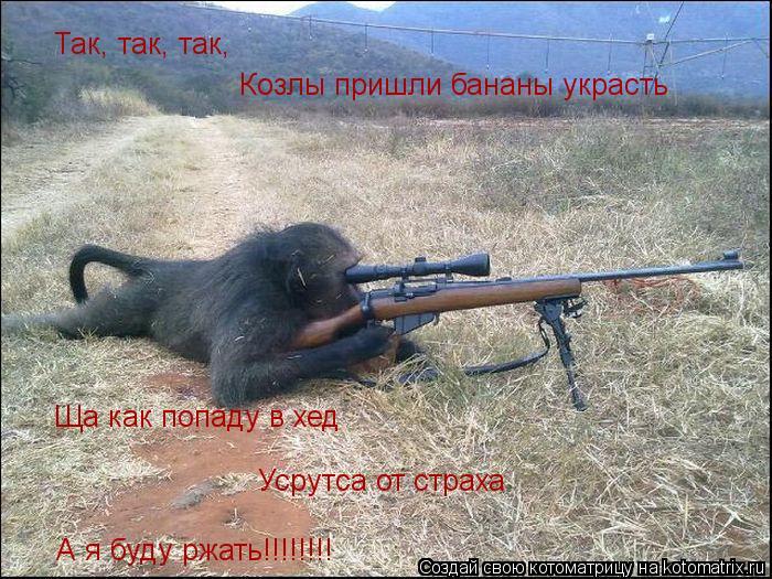 Котоматрица: Так, так, так, Козлы пришли бананы украсть Ща как попаду в хед  Усрутса от страха А я буду ржать!!!!!!!!