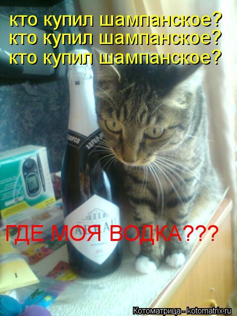 Котоматрица: кто купил шампанское? кто купил шампанское? кто купил шампанское? ГДЕ МОЯ ВОДКА???