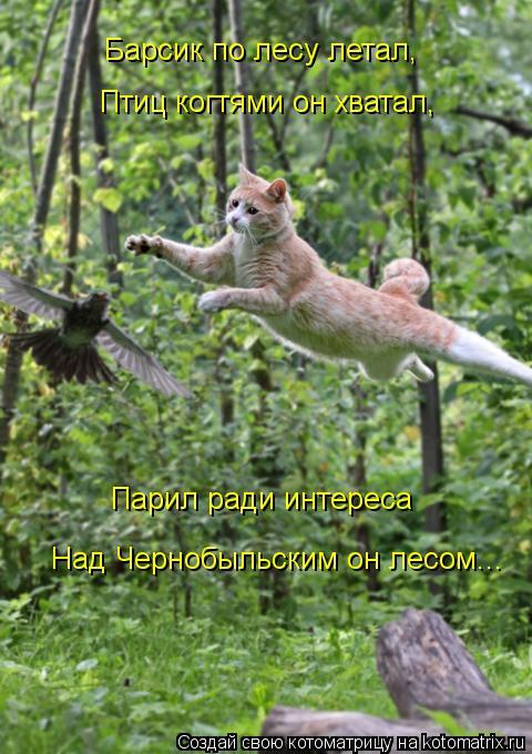 Котоматрица: Барсик по лесу летал, Птиц когтями он хватал, Парил ради интереса Над Чернобыльским он лесом...