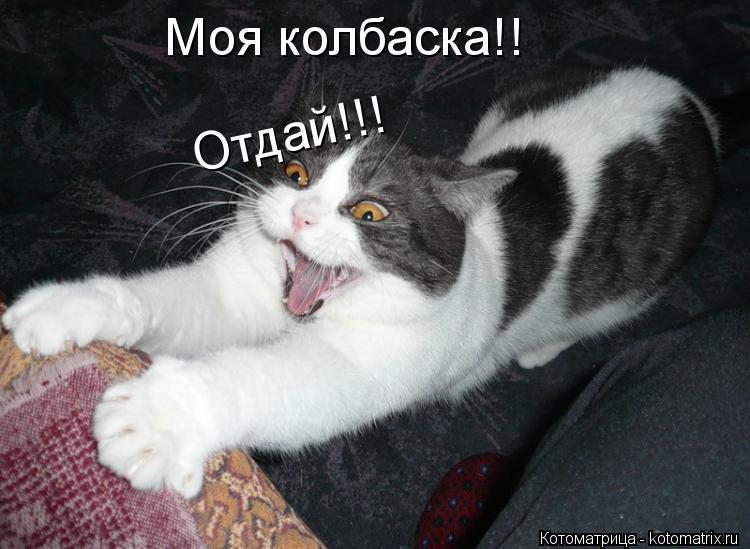 Котоматрица: Моя колбаска!! Отдай!!! Отдай!!!