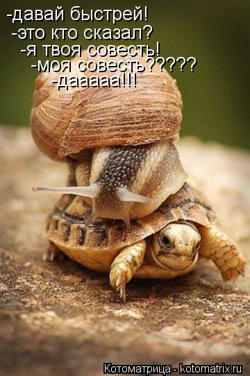 Котоматрица: -давай быстрей! -это кто сказал? -я твоя совесть! -моя совесть????? -дааааа!!!