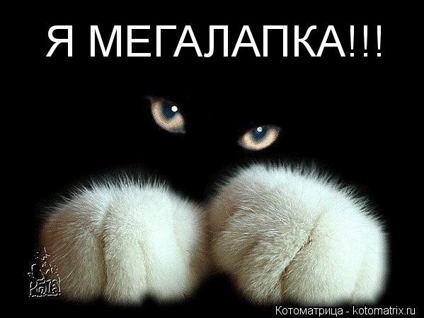 Котоматрица: Я МЕГАЛАПКА!!!