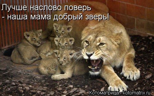 Котоматрица: Лучше наслово поверь  - наша мама добрый зверь!