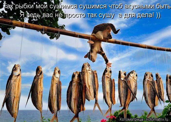 Котоматрица: Так рыбки мои сушимся сушимся чтоб вкусными быть! Я ведь вас не просто так сушу  а для дела!  Я ведь вас не просто так сушу  а для дела! ))