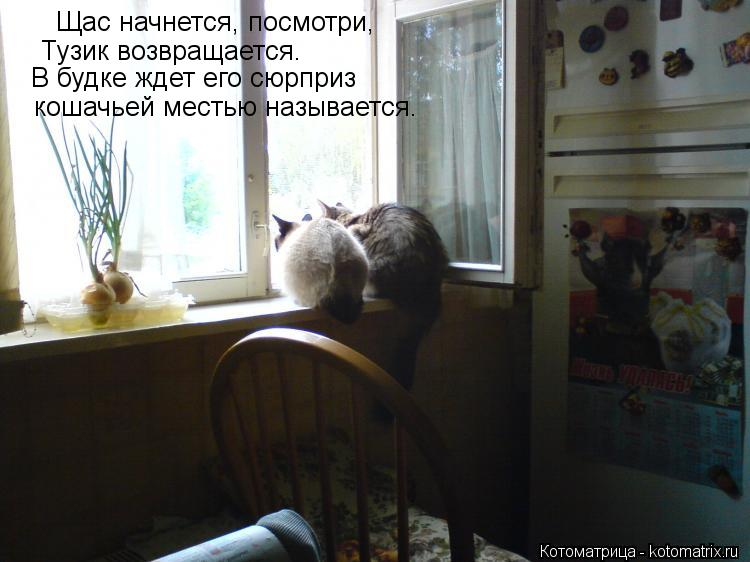 Котоматрица: Щас начнется, посмотри, Тузик возвращается. В будке ждет его сюрприз кошачьей местью называется.