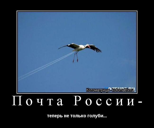 Котоматрица: Почта России- теперь не только голуби...