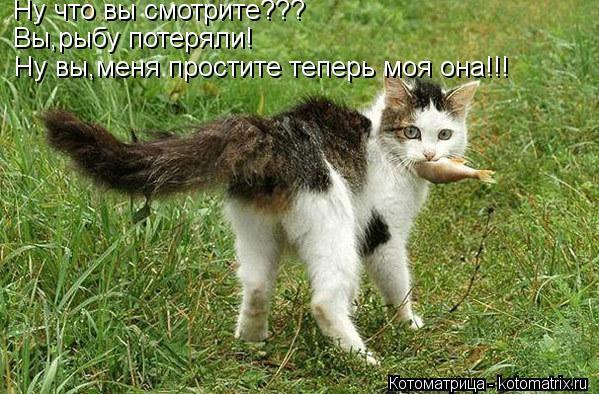 Котоматрица: Ну что вы смотрите??? Вы,рыбу потеряли! Ну вы,меня простите теперь моя она!!!