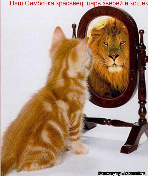 Котоматрица: Наш Симбочка красавец, царь зверей и кошек