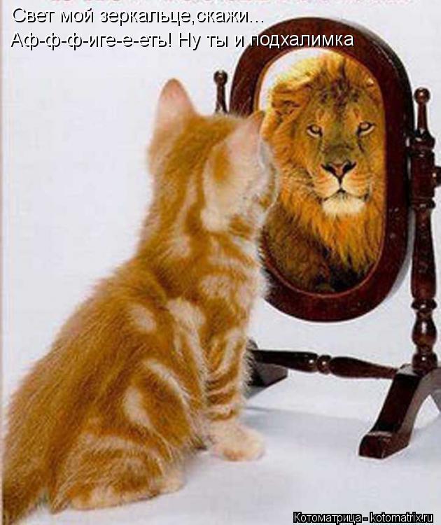 Котоматрица: Свет мой зеркальце,скажи... Аф-ф-ф-иге-е-еть! Ну ты и подхалимка