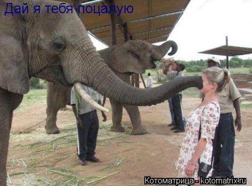 Котоматрица: Дай я тебя поцалую