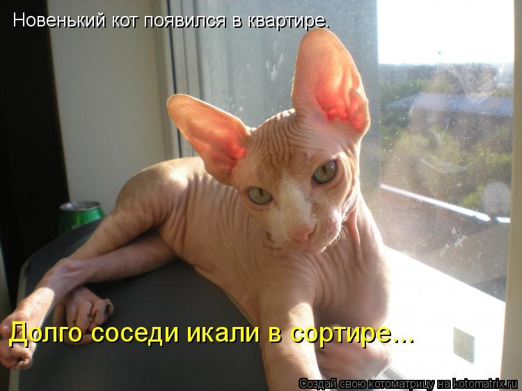 Котоматрица: Новенький кот появился в квартире. Долго соседи икали в сортире...