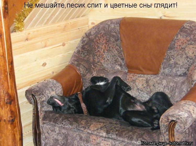 Котоматрица: Не мешайте,песик спит и цветные сны глядит!