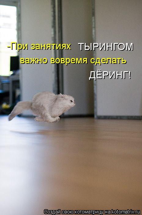 Котоматрица: -При занятиях  ТЫРИНГОМ важно вовремя сделать ДЁРИНГ!