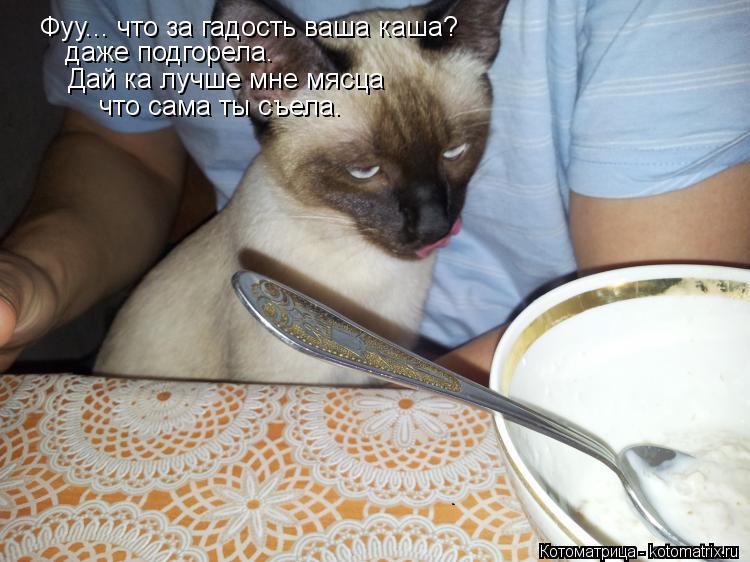 Котоматрица: Фуу... что за гадость ваша каша? даже подгорела. Дай ка лучше мне мясца что сама ты съела.