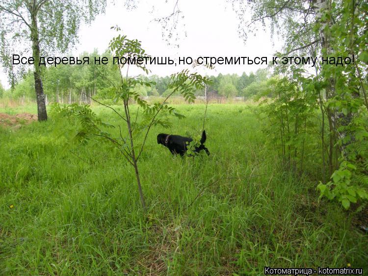Котоматрица: Все деревья не пометишь,но стремиться к этому надо!